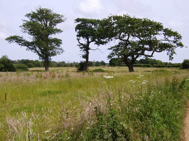 Trees near Birchmore Farm - geograph.org.uk - 485483
