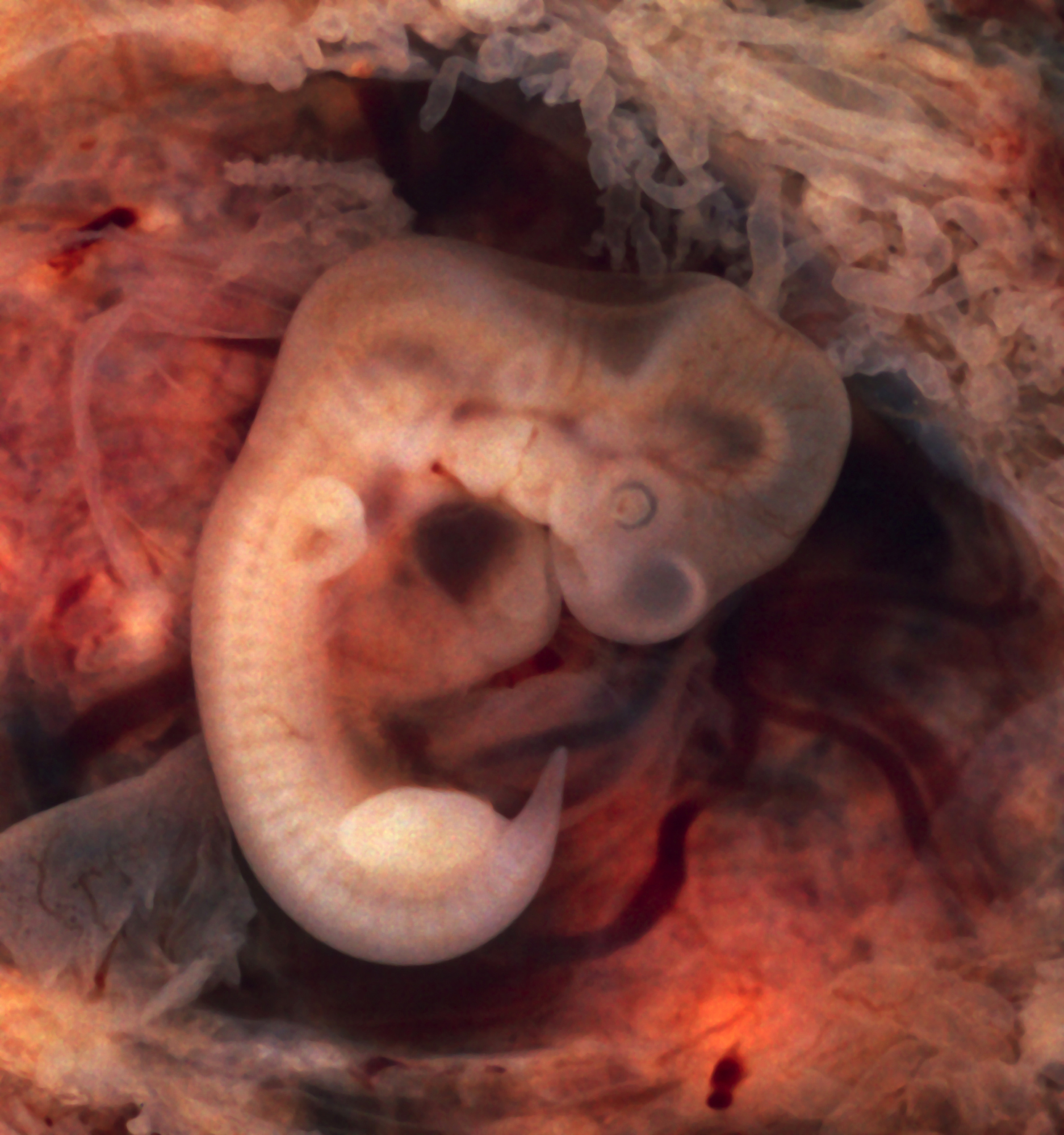 Image result for humans look like reptile at first in womb