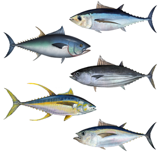 File:Tuna assortment.png
