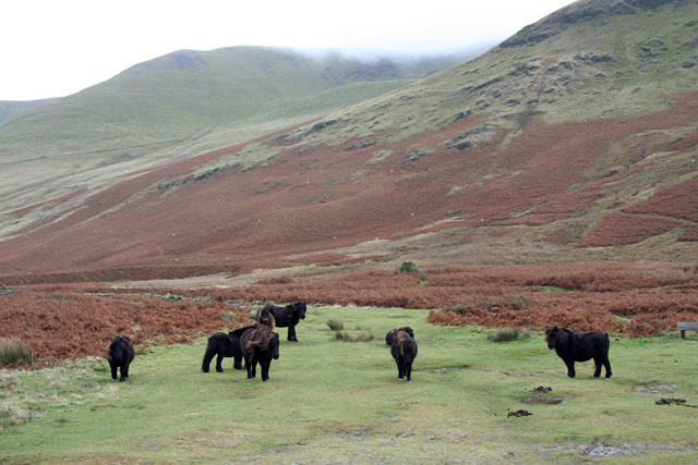 File:A herd of ponies near Roundhouse.jpg