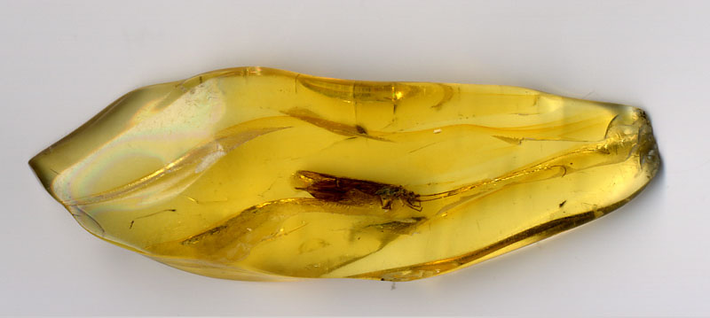 Ficheiro:Amber.insect.800pix.050203.jpg