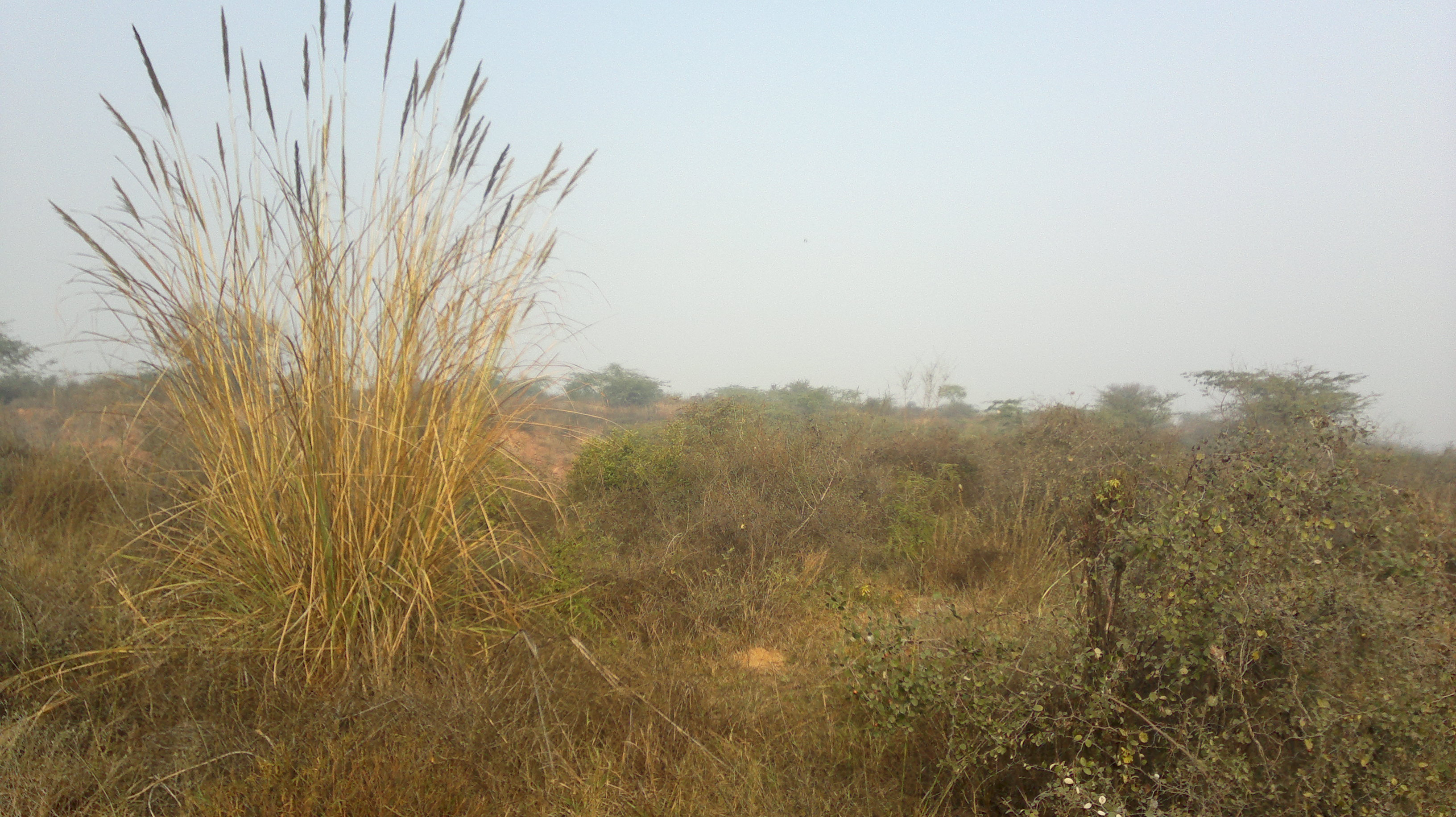 types of natural vegetation in india wikipedia