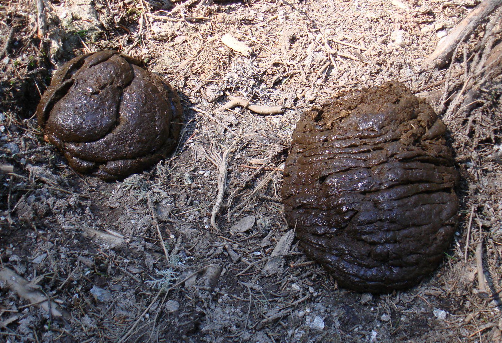 Baligă - Wikipedia