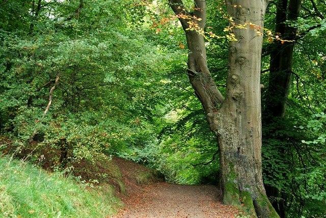 Belvoir forest, Belfast (1) - geograph.org.uk - 1515048
