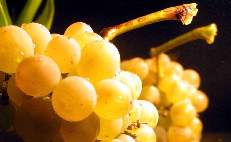 Bijelo grozde