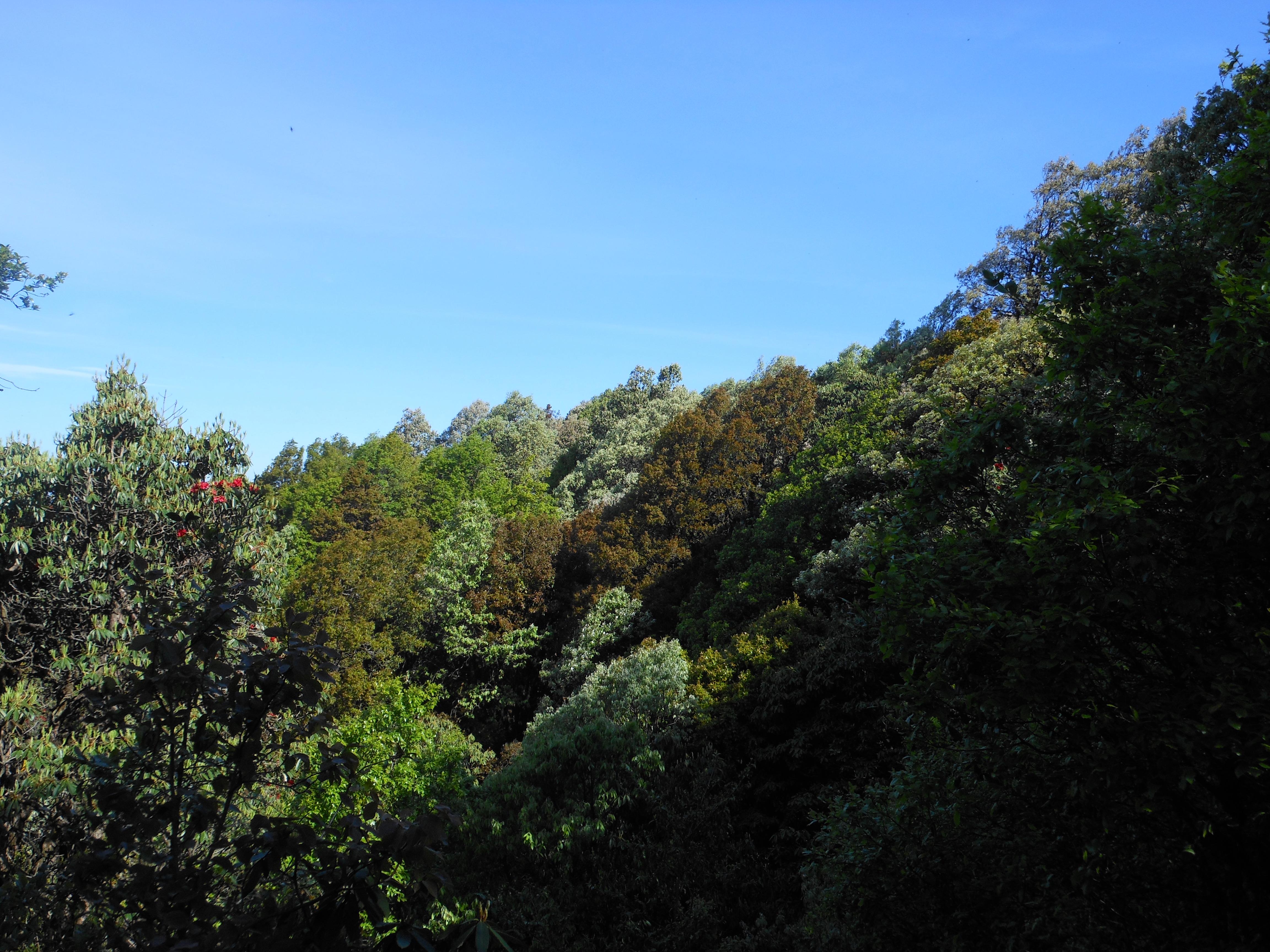 Binsar, Uttarakhand - A Fascinating Breakthrough. 4
