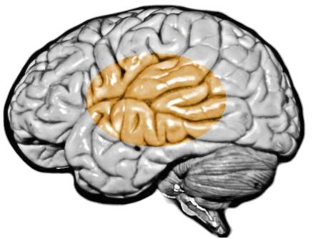 Datei:Brain hirez 10 Prozent.jpg – Wikipedia