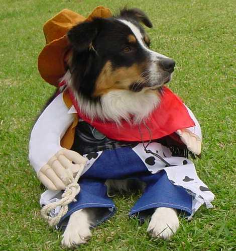 Cowboy Aussie Echo