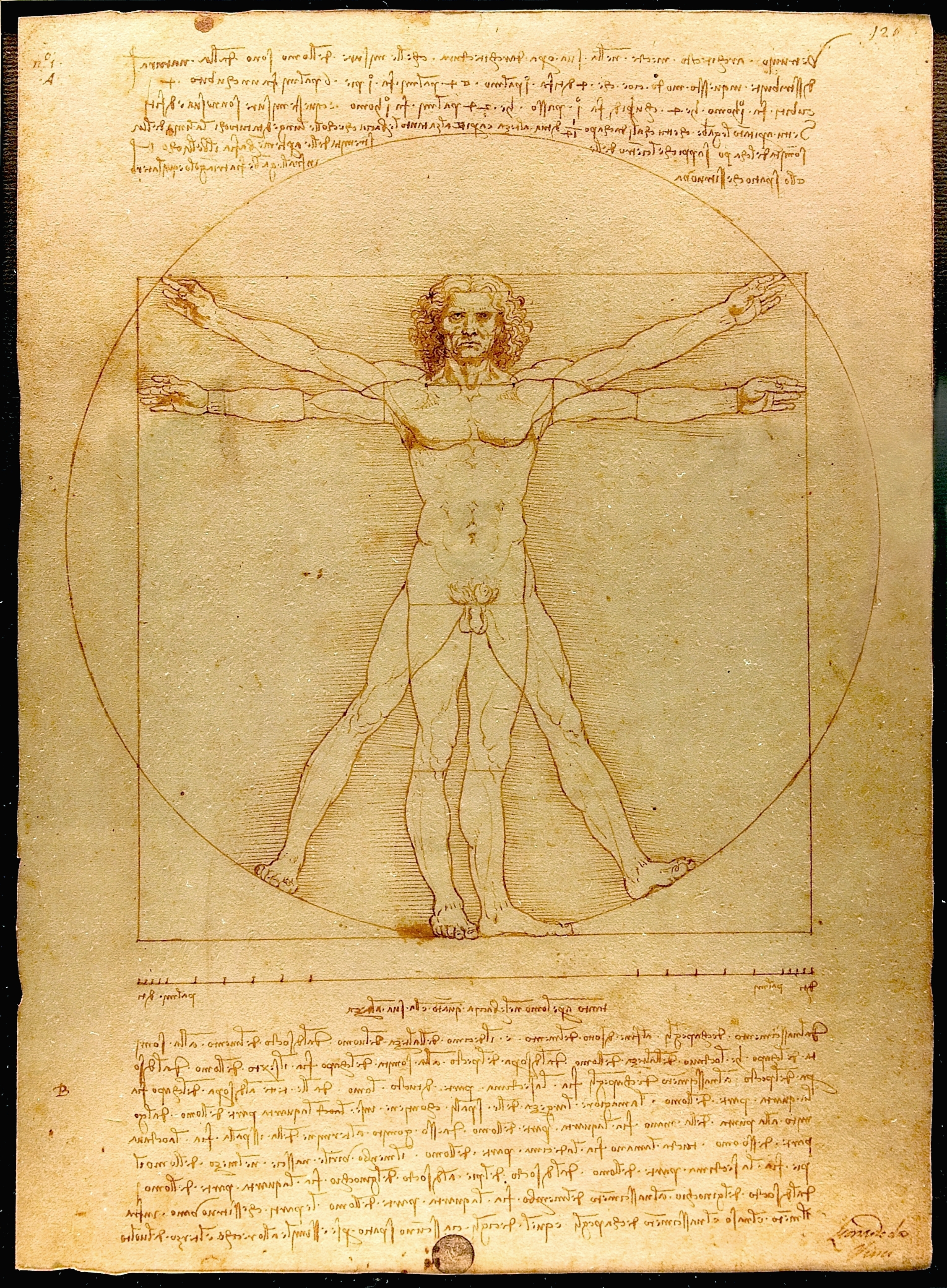 Image result for vitruvian man
