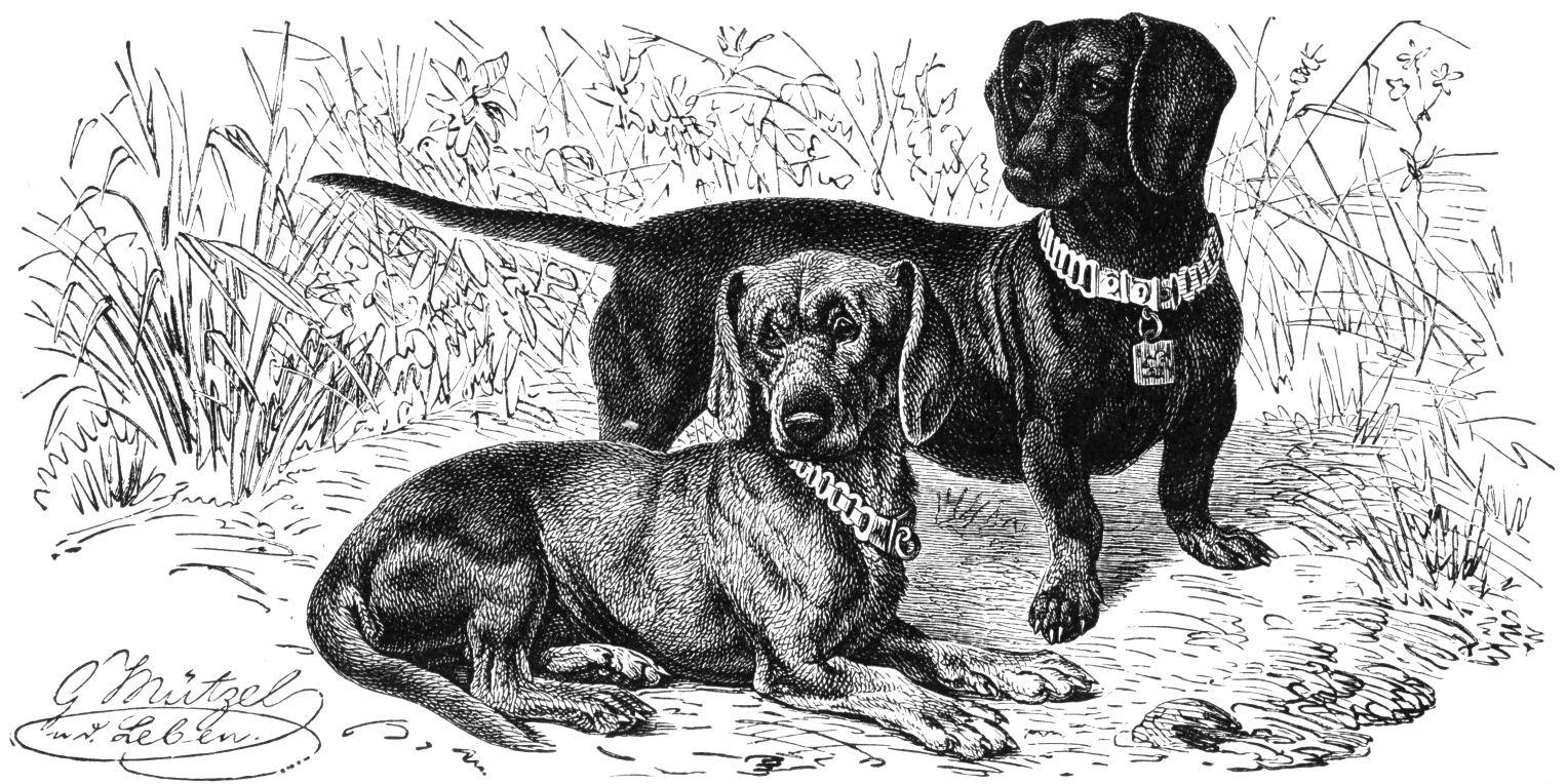 Image Result For Have Size Dog