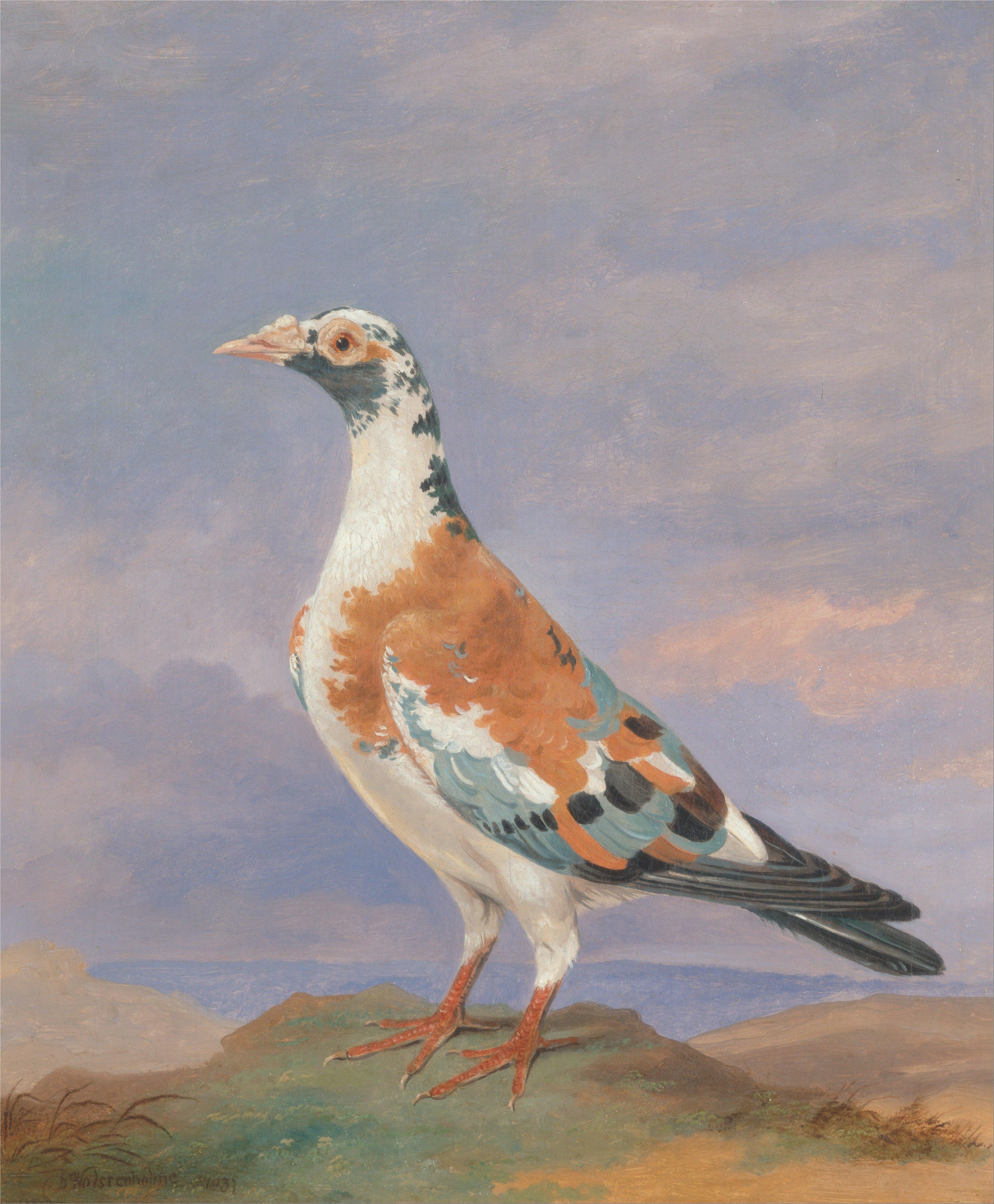 Canvas Painting Animals