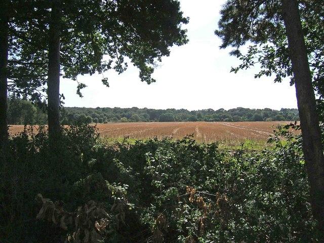 Farmland adjacent to Shrawley Wood - geograph.org.uk - 1484870