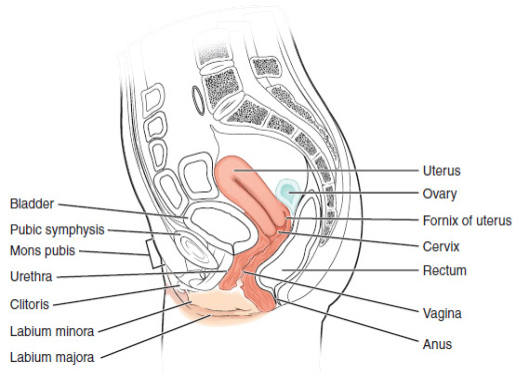 She eunuch ovaries minor vagina