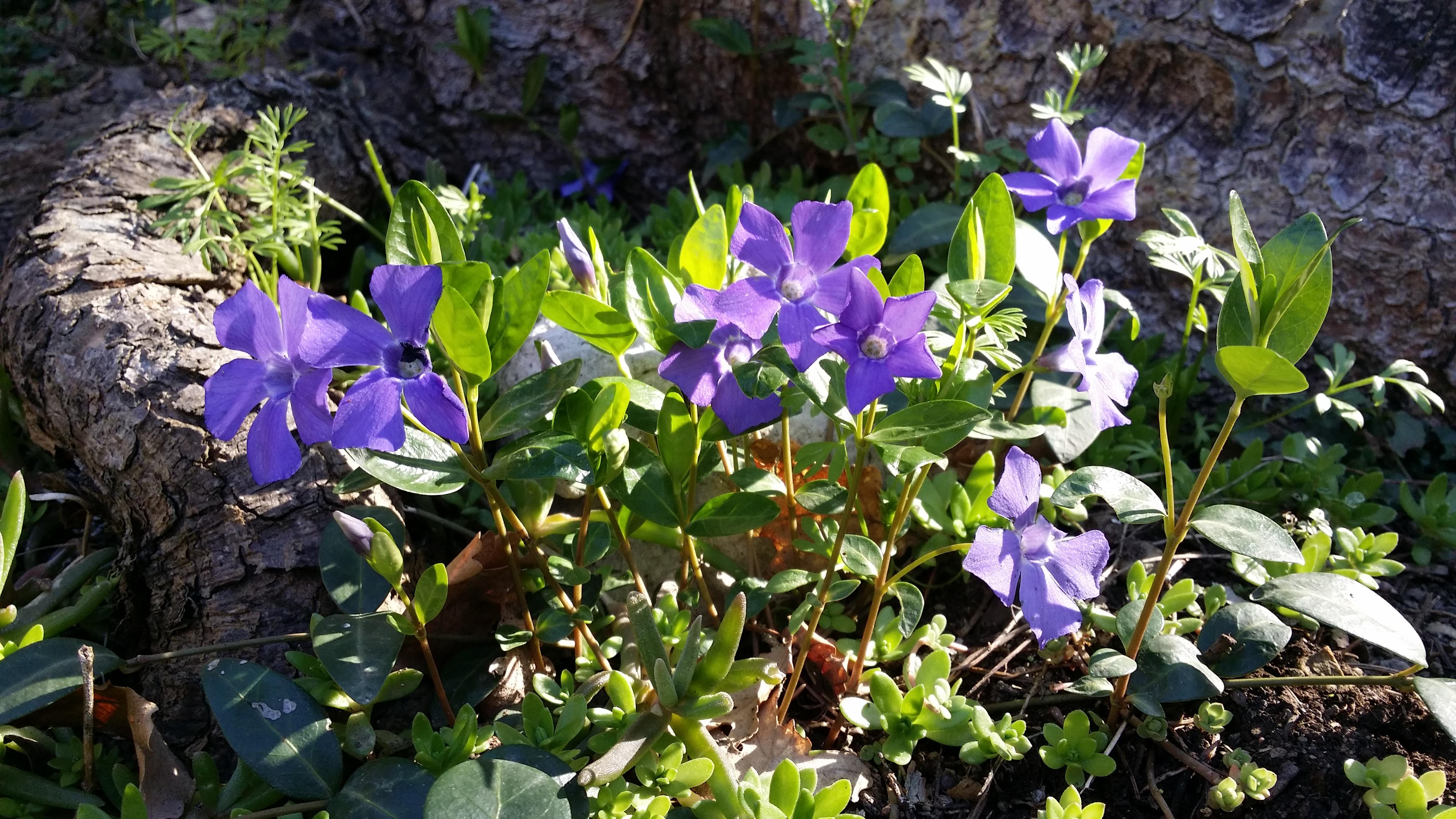 File fiori primaverili gavemo sol gavemo manca solo la - Fiori primaverili ...