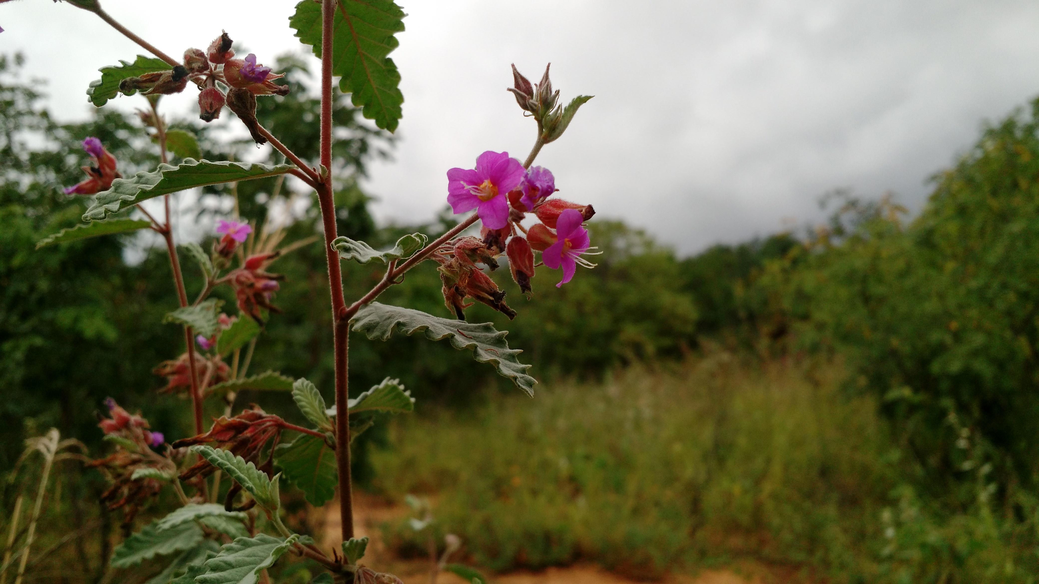 Fileflor De Arbustosjpg Wikimedia Commons - Arbustos-de-flor
