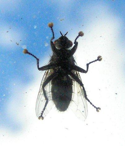 компактные, муха на стекле картинки сюда новый год