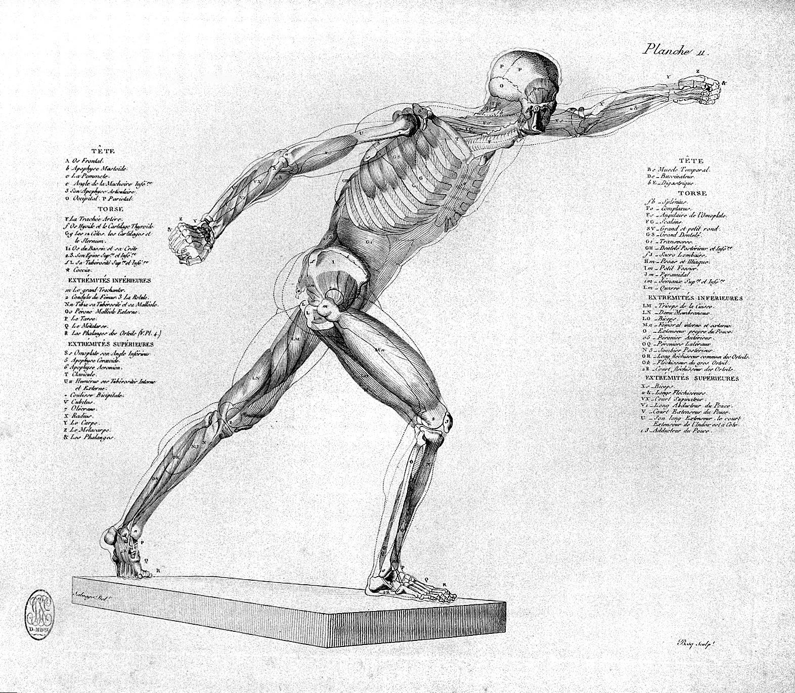 File:Jean-Galbert Salvage, Anatomie du Gladiateur Wellcome L0030265 ...