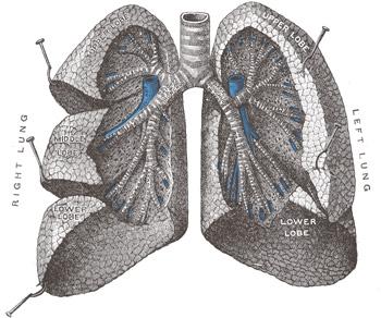 Agua en los pulmones por ahogamientos