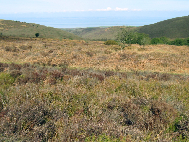 Moorland at the top of Holford Combe - geograph.org.uk - 1766894