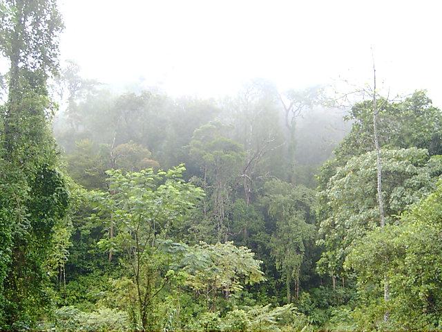 Morning mist in Sinharaja
