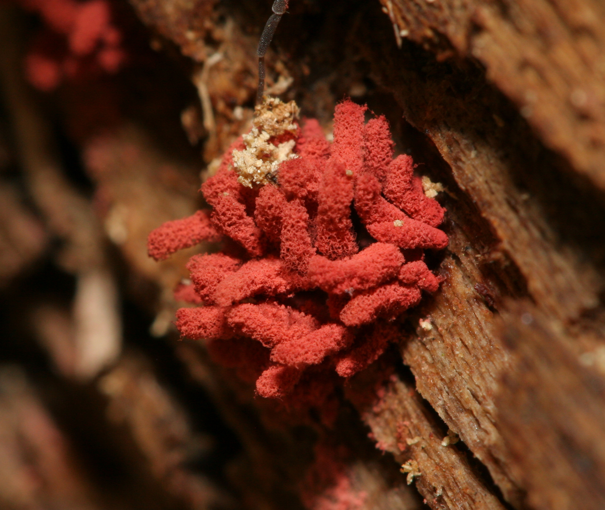 Is Mold Or Fiungus On Bark Poisonous To Dogs