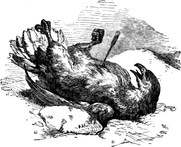 File:Page 81 illustration to Three hundred Aesop's fables (Townshend).png