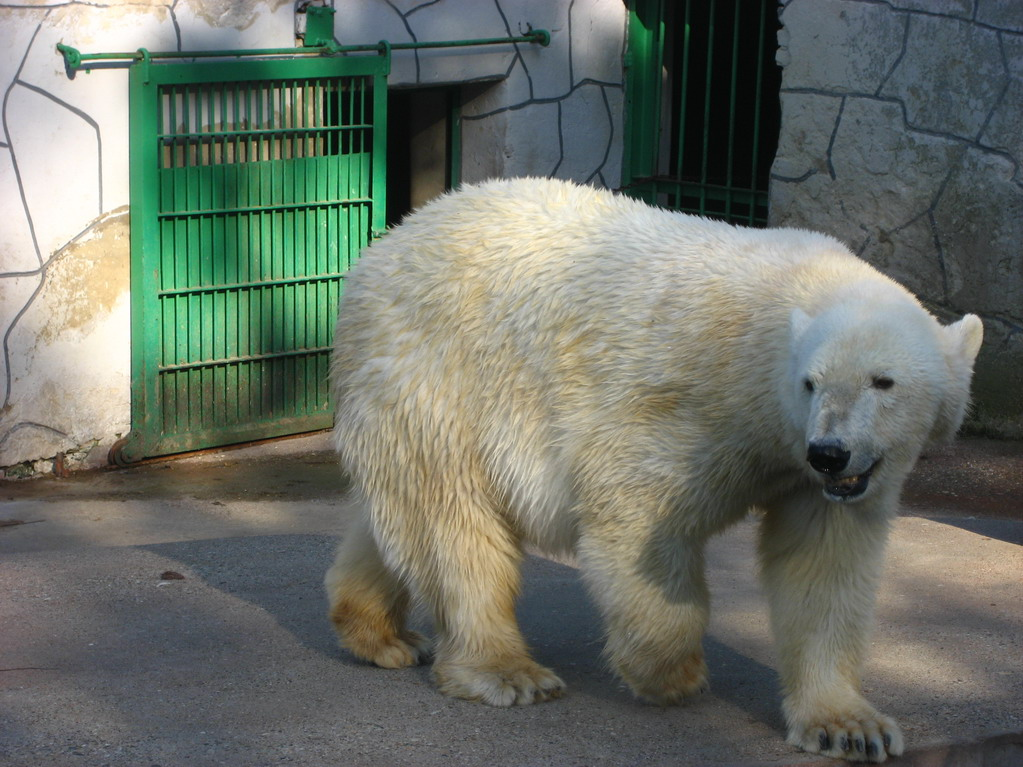File:Palic ZOO, polar ...