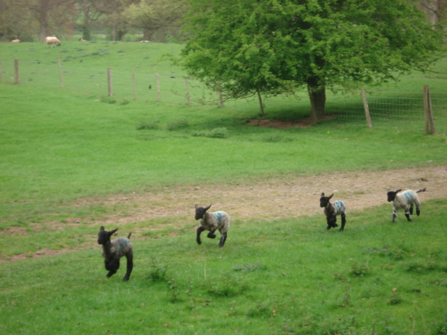 Pasture to the north of Berrington Hall - geograph.org.uk - 454618