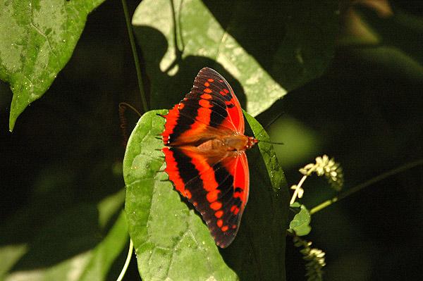 Bienfaits Griffonia Simplicifolia - Le LSD peut-il devenir un traitement contre la déprime ou le ...