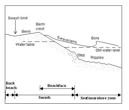 causes of macrofaunal outline on a dissipative beach Dissipative work is assigned to two different shear stress mechanisms prevailing in separate regions of the shorezone system, an outer solution referred to as the shorerise and a bar-berm inner solution.