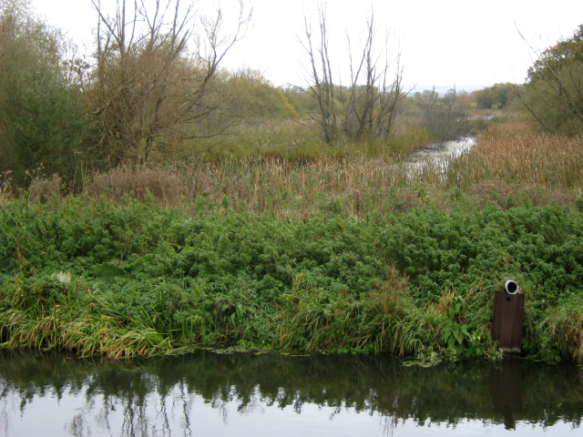 The Glastonbury Canal and Meare Heath (geograph 2671996)