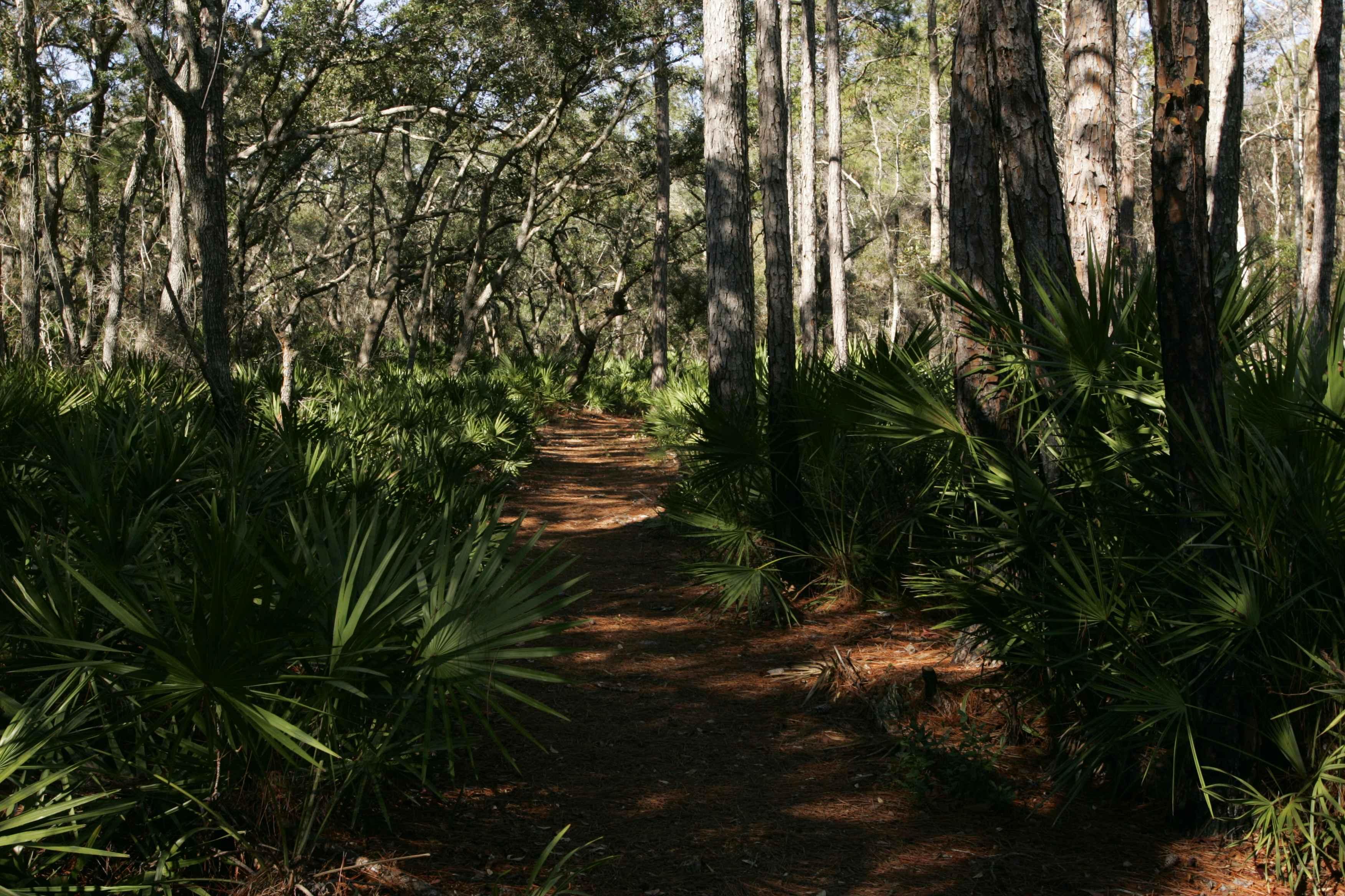 S Tropical Trail Merritt Island Fl