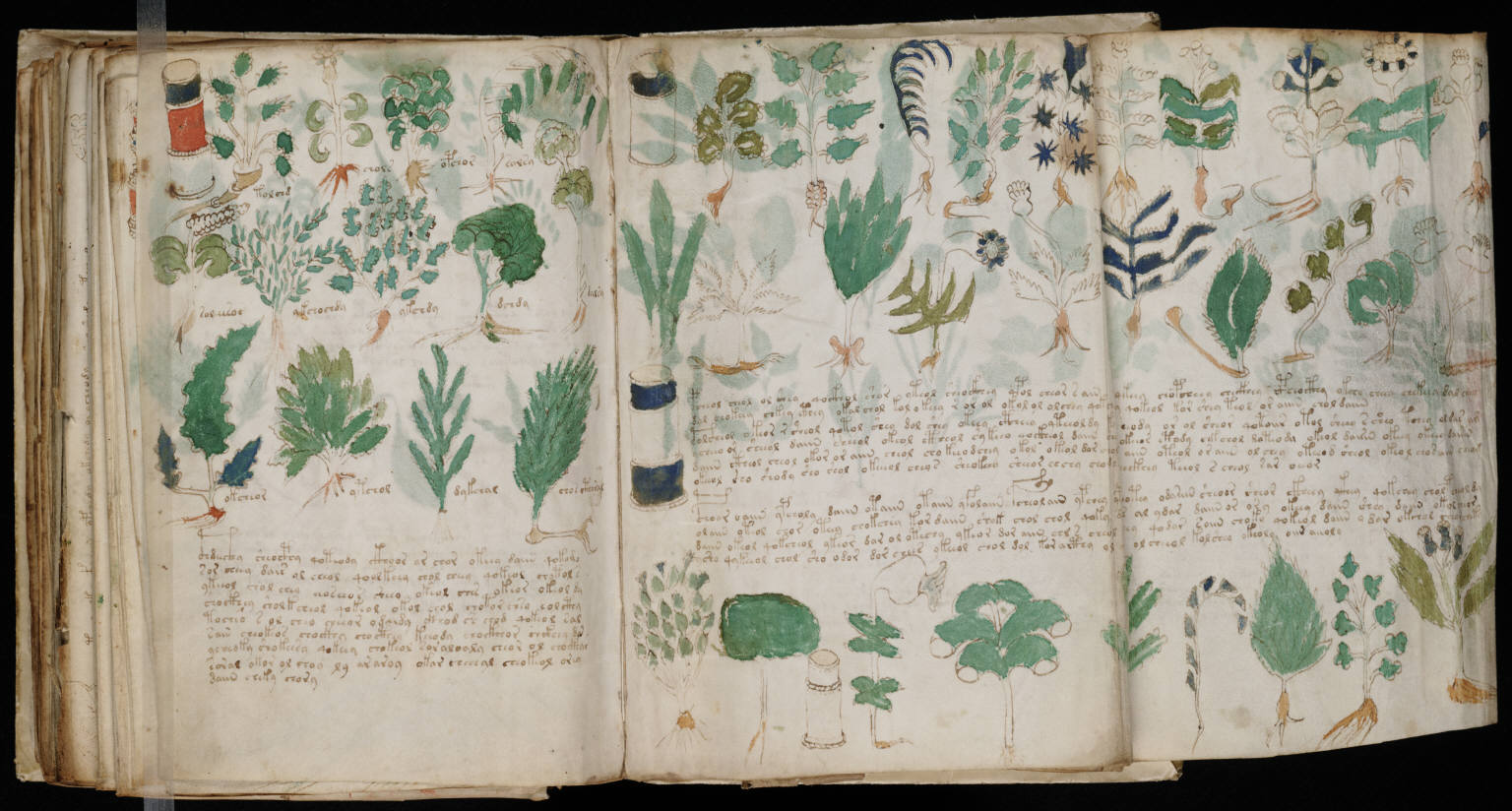 three pages from the Voynich manuscript, showing script and botanical drawings