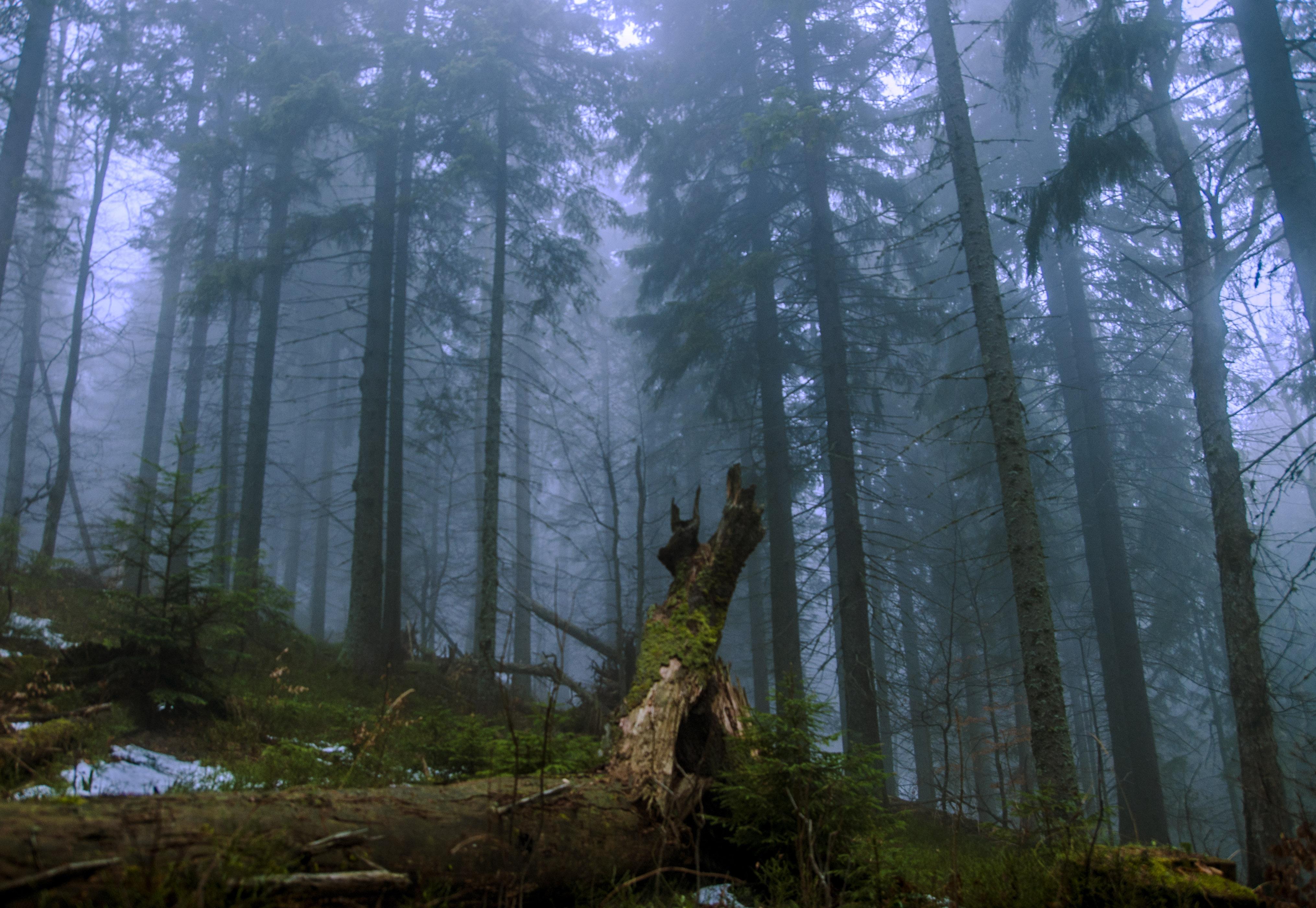 Файл:Ліс під Петросом, Карпати, Україна.jpg — Вікіпедія
