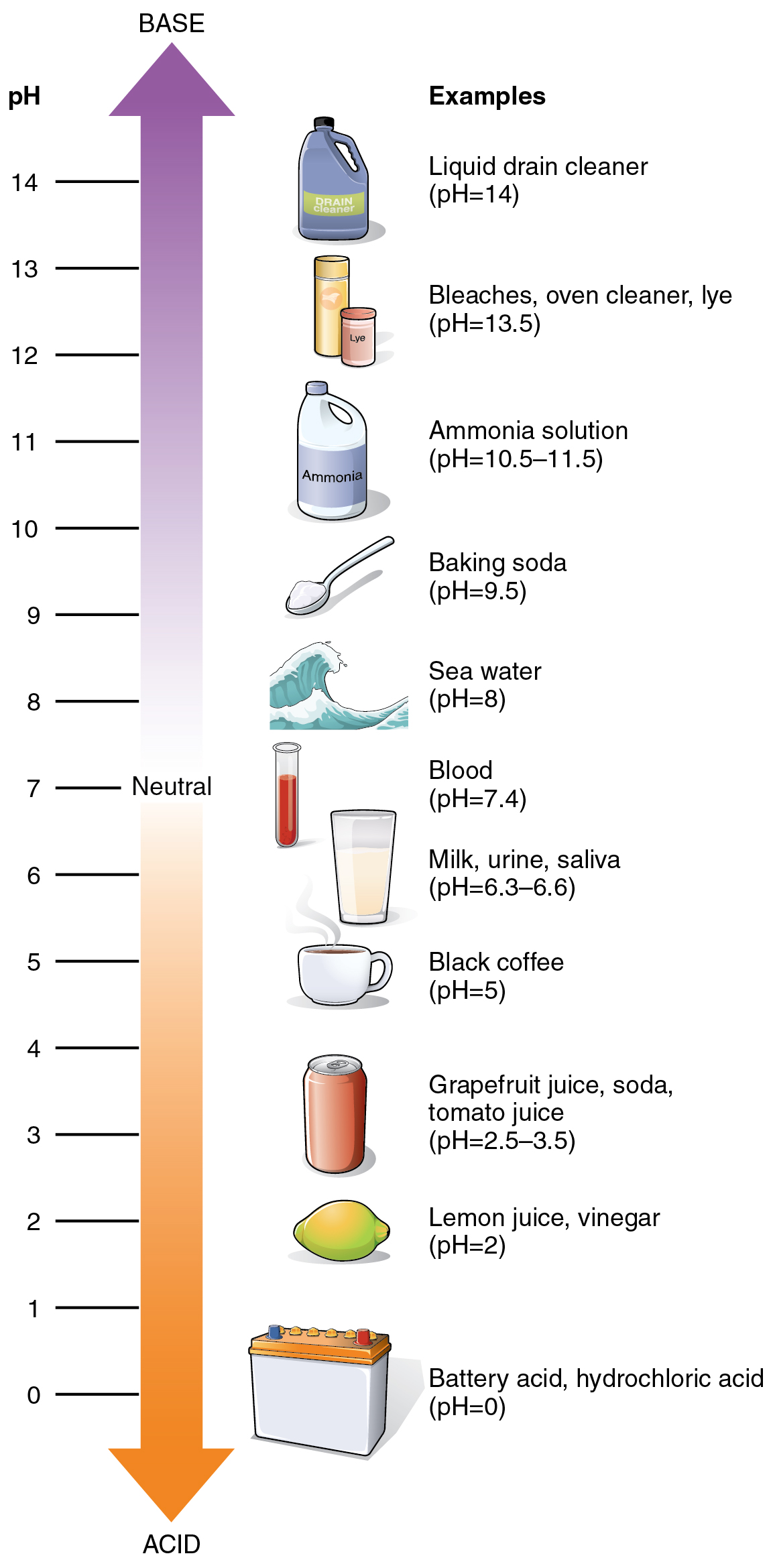 pH - Wikipedia for Ph Scale Acids And Bases  54lyp