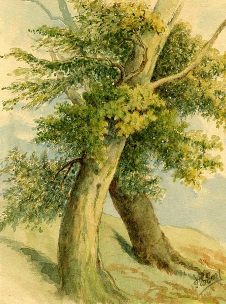 Študija drevesi by Alojz Eberl