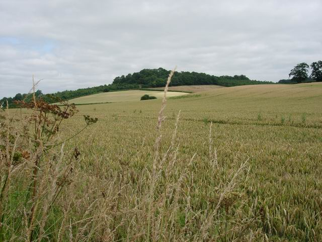 File:Arable crops - geograph.org.uk - 206228.jpg