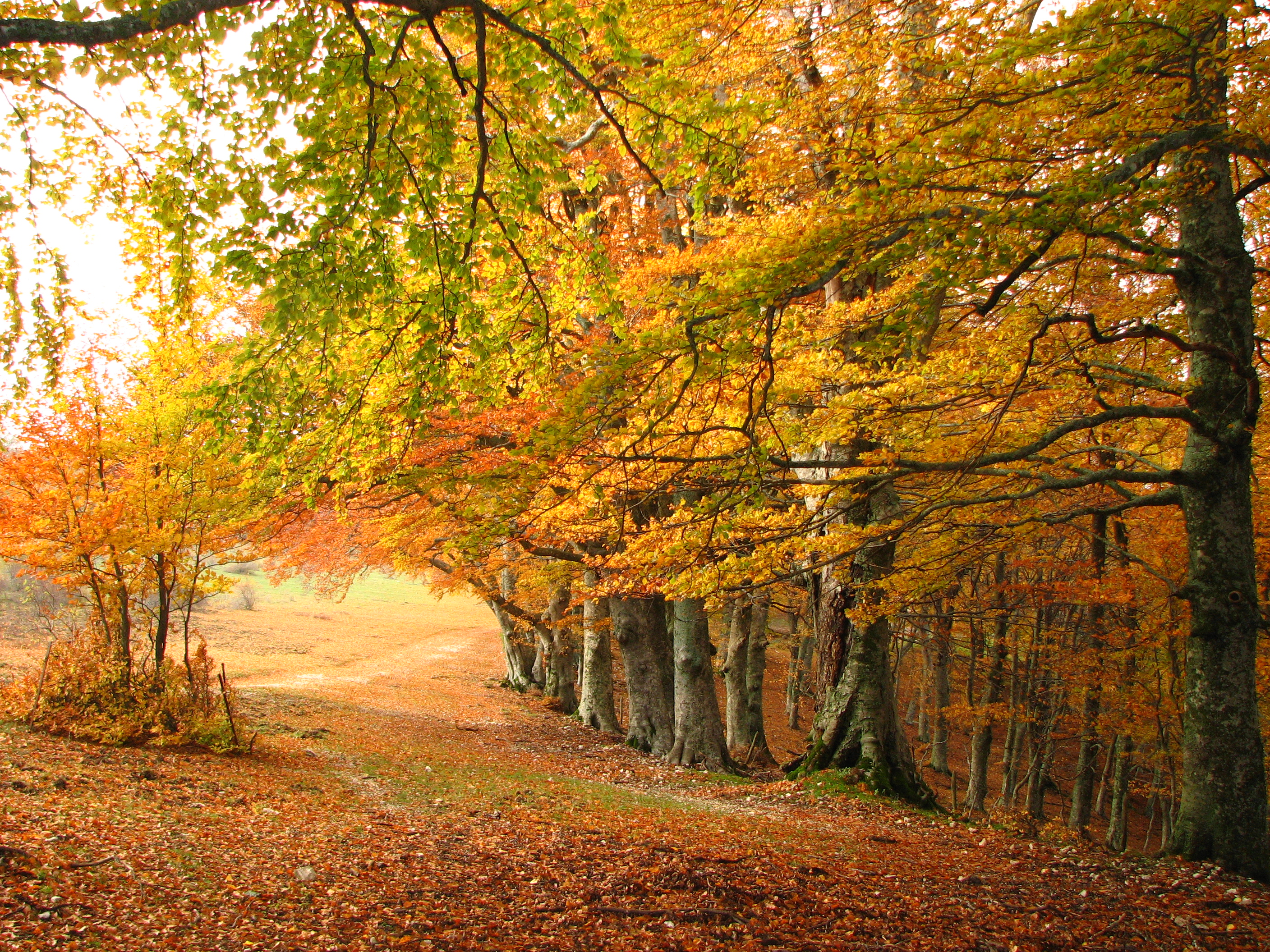 File Autumn In Italy Jpg Wikimedia Commons