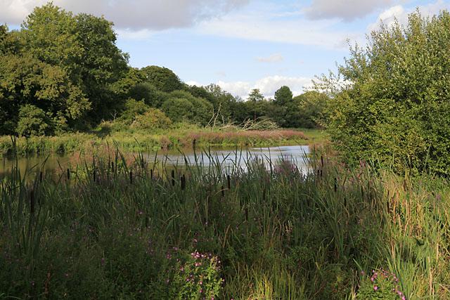 Avington Lake - geograph.org.uk - 227845