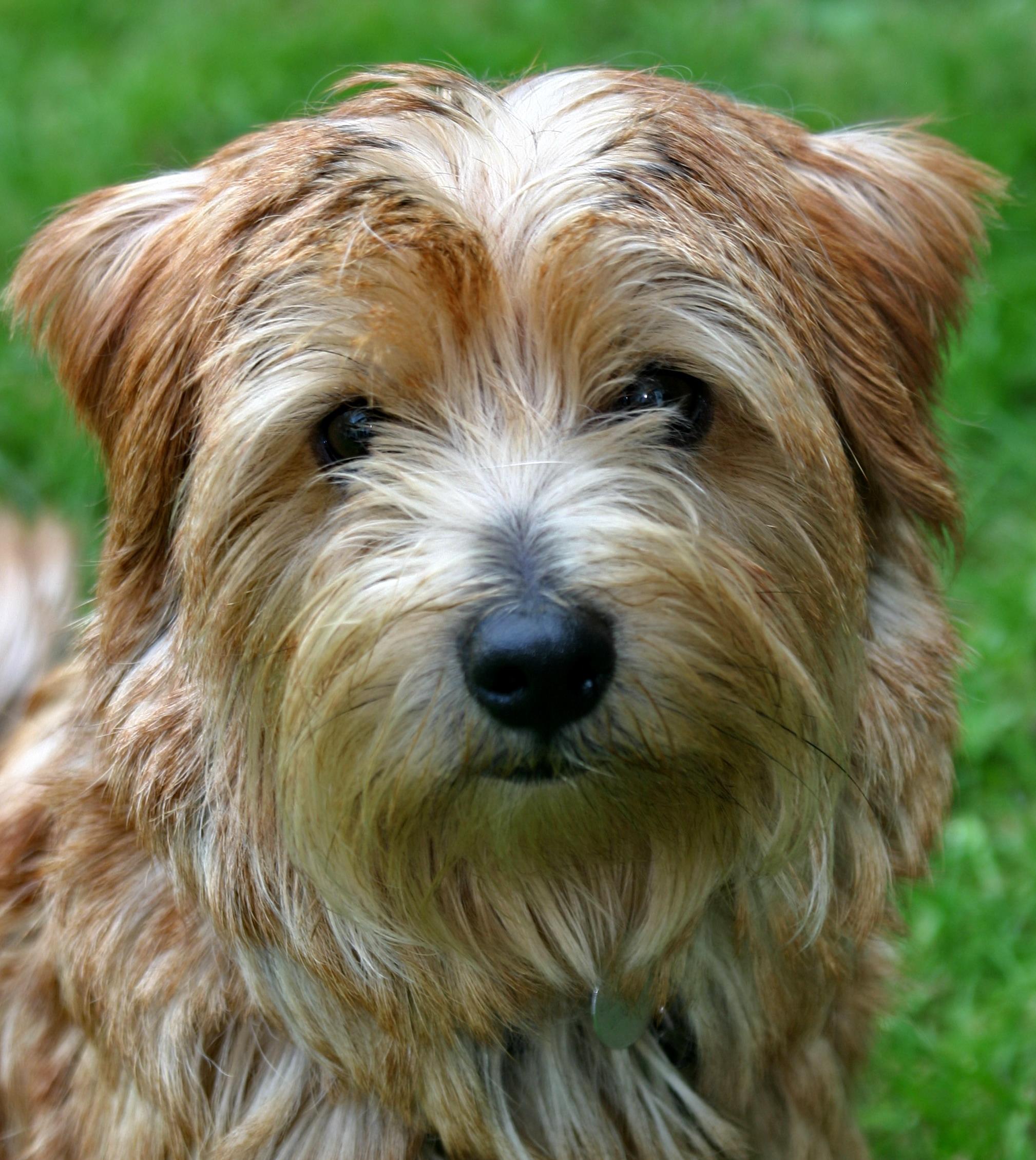 Dog Eared Copy Tanya Perez