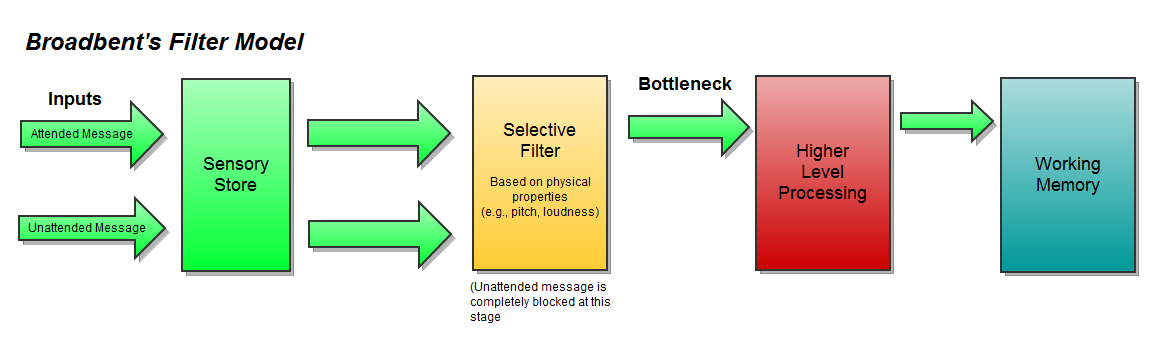 motivation and broadbent s filter model of attention Broadbent's filter theory of selective attention and short term memory edit broadbent's theories of selective attention and short-term memory were developed as digital computers were broadbent's filter model is referred to as an early selection model because irrelevant messages are.