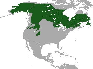 Canada Lynx area