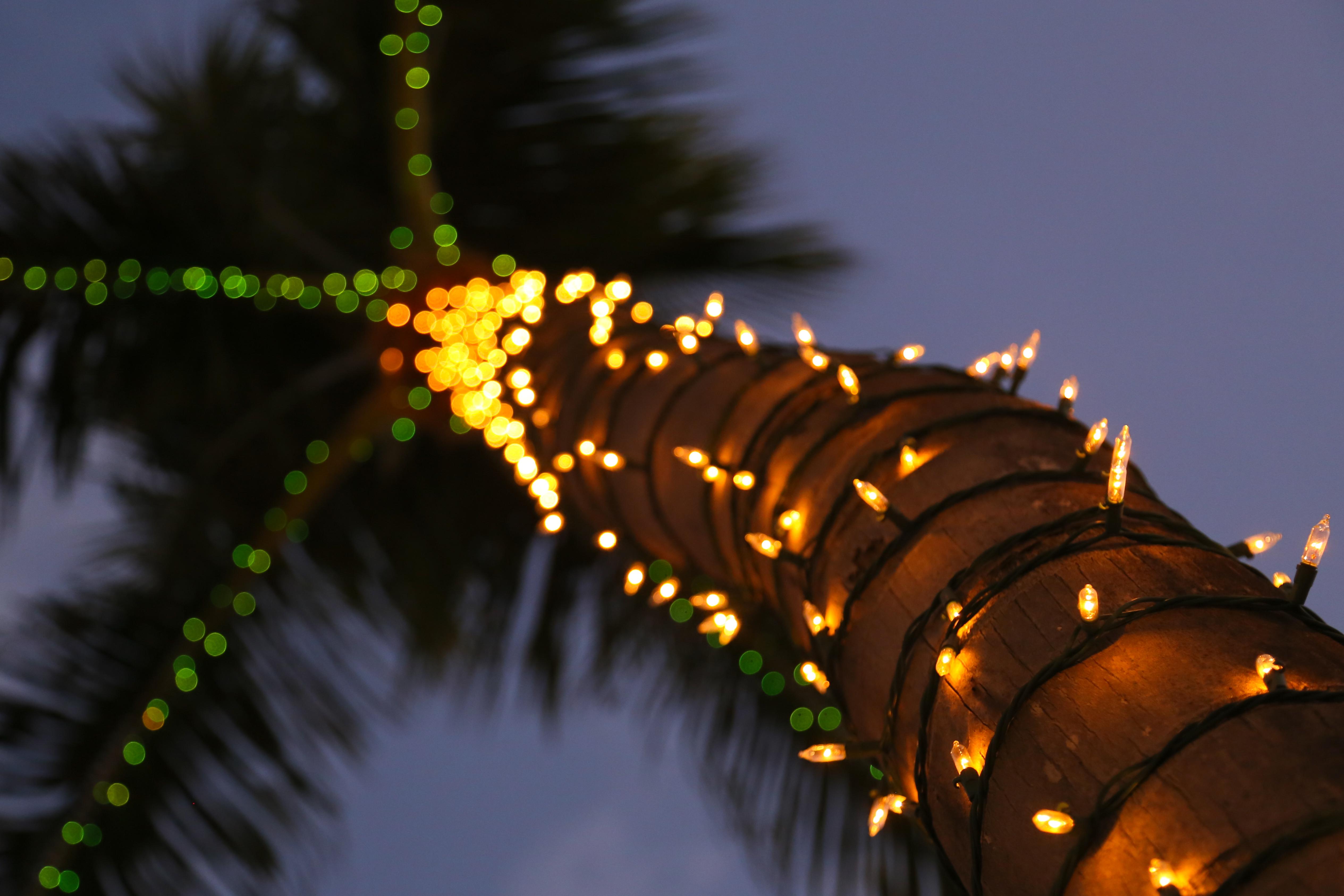 Christmas Palm Tree Wallpaper File In Paradise Flickr Joe Parks G