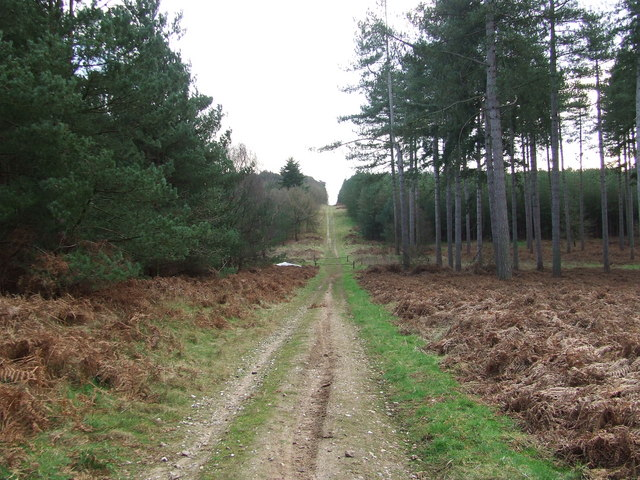 Downhill track - geograph.org.uk - 670541