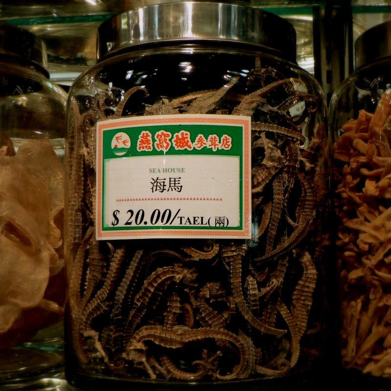 File:Dried Seahorses for Sale jpg - Wikimedia Commons