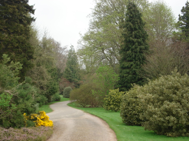 Driveway leading to Berrington Hall - geograph.org.uk - 454665