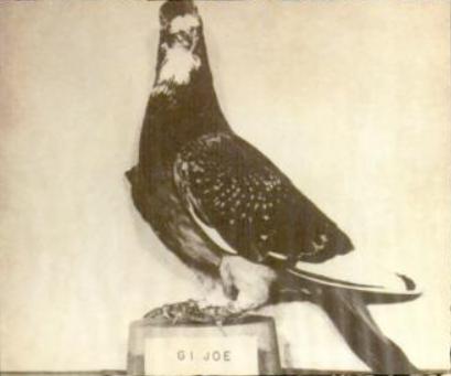 GI Joe Pigeon.png