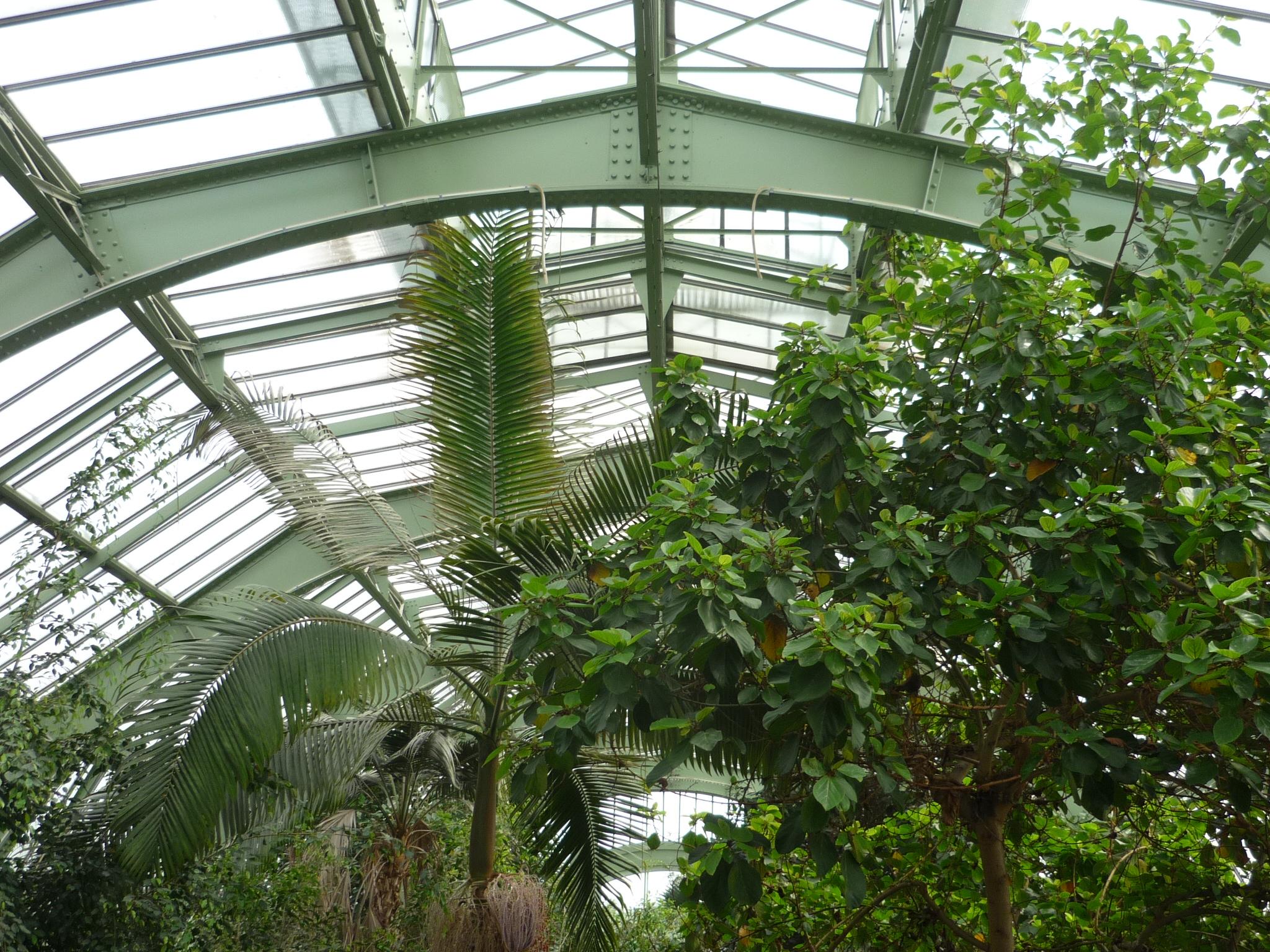 File Jardin Des Plantes Paris Serre Tropicale5 Jpg Wikimedia Commons