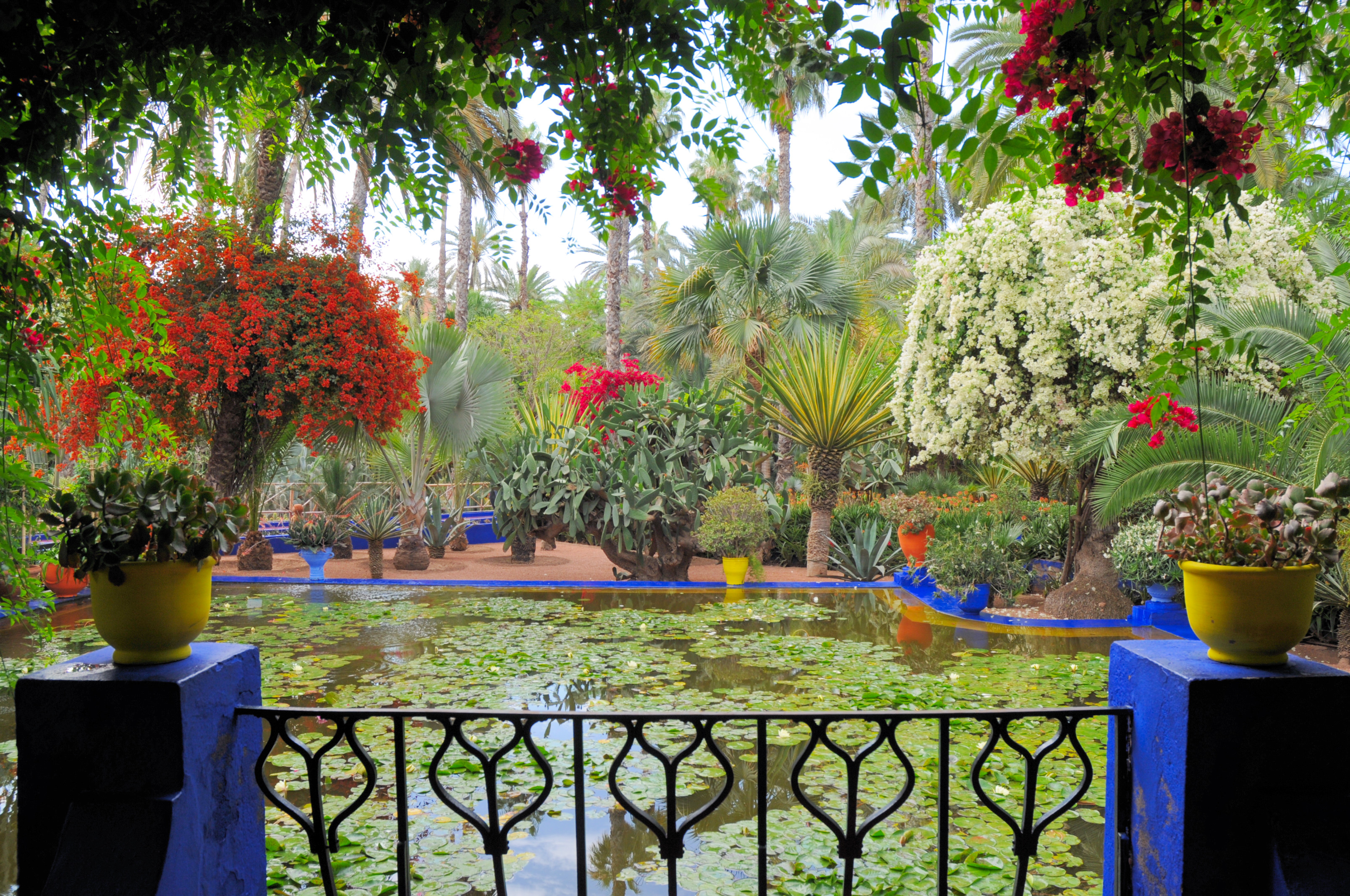 File le jardin des majorelle 14 jpg wikimedia commons for Culture des jardins