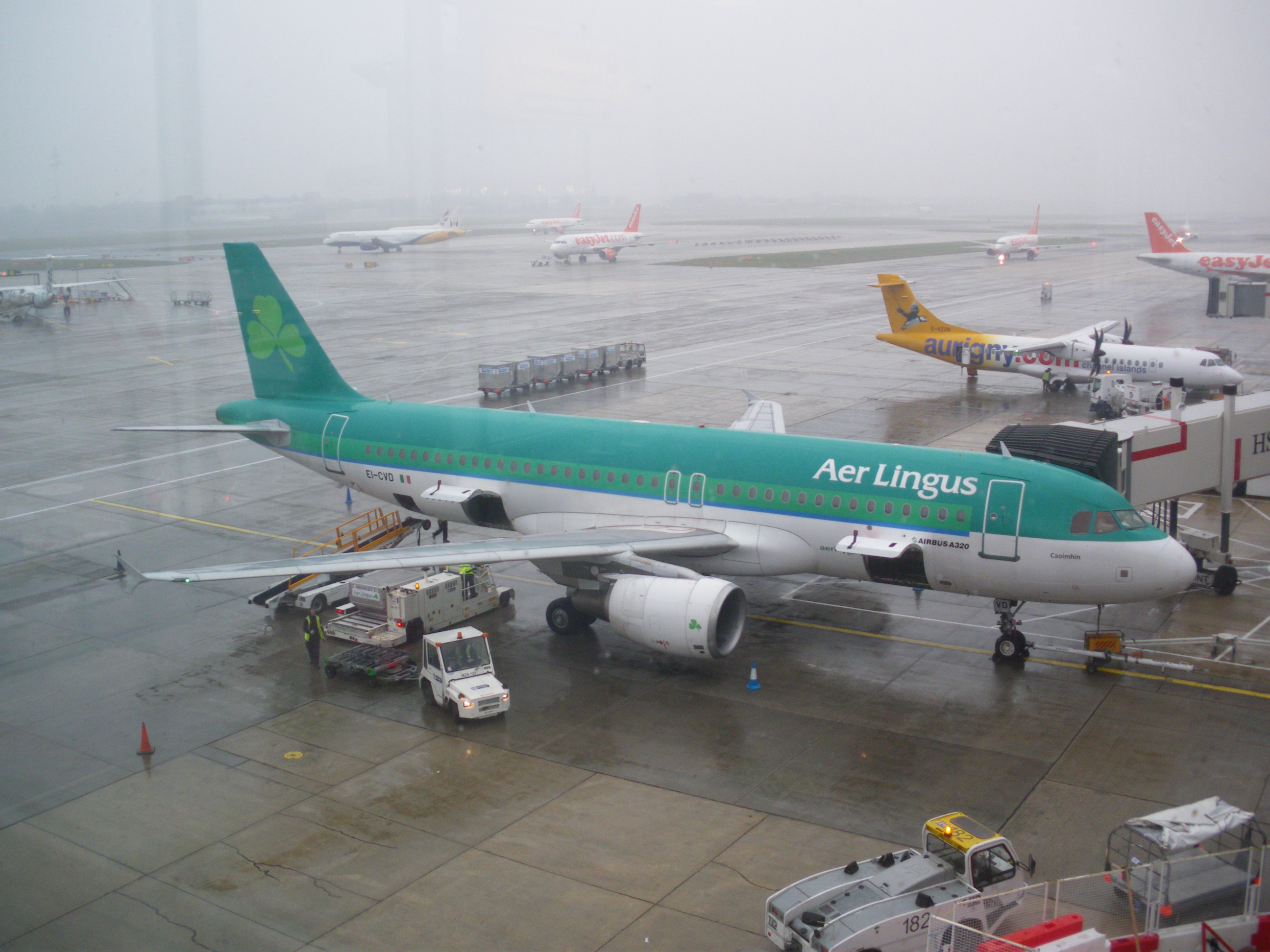 Image Result For Aer Lingus New